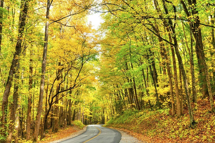 Asheville's Fall Foliage