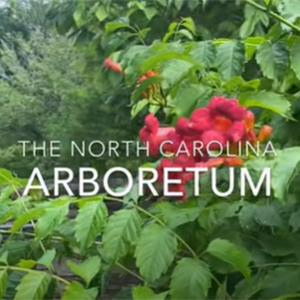 NC-Arboretum